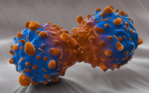 Emerging Therapies for New Targets for Metastatic NSCLC