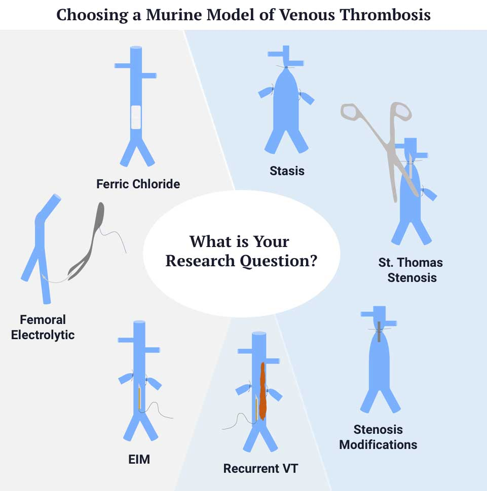 Advancing Basic Research on Venous Thrombosis