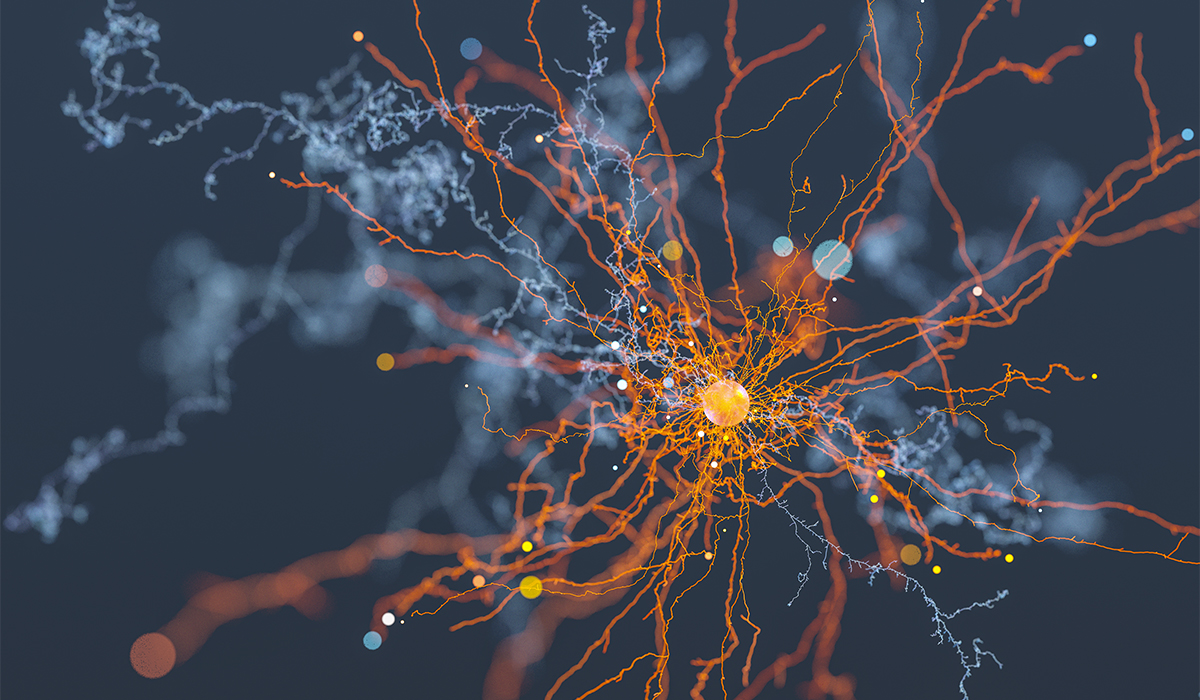 Brain Connections Behind Stress