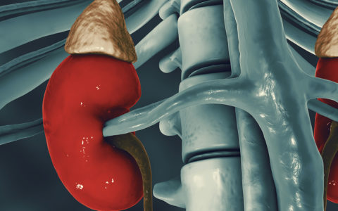 New Findings Alter View of Tubular Injury in CKD